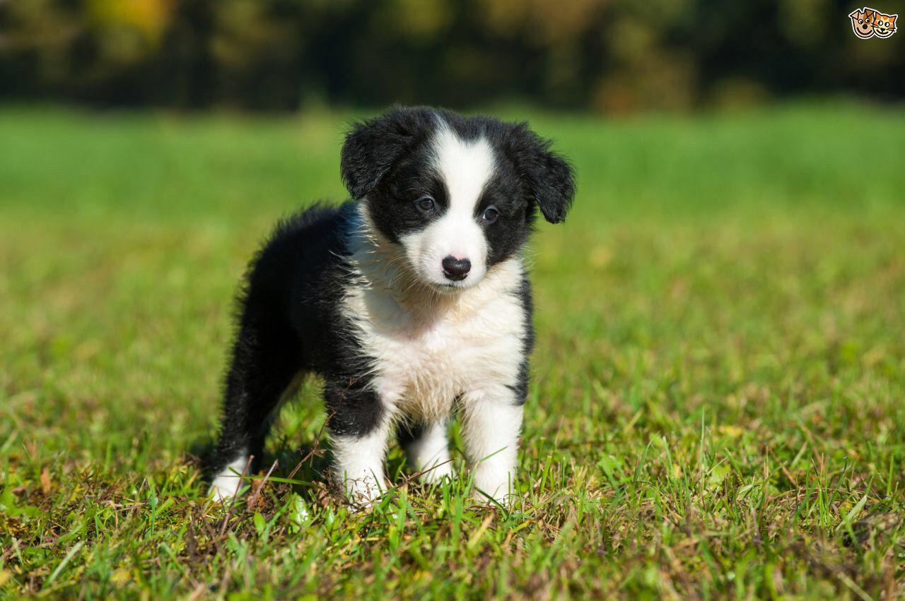 Most Dog Friendly Dog Breeds Uk
