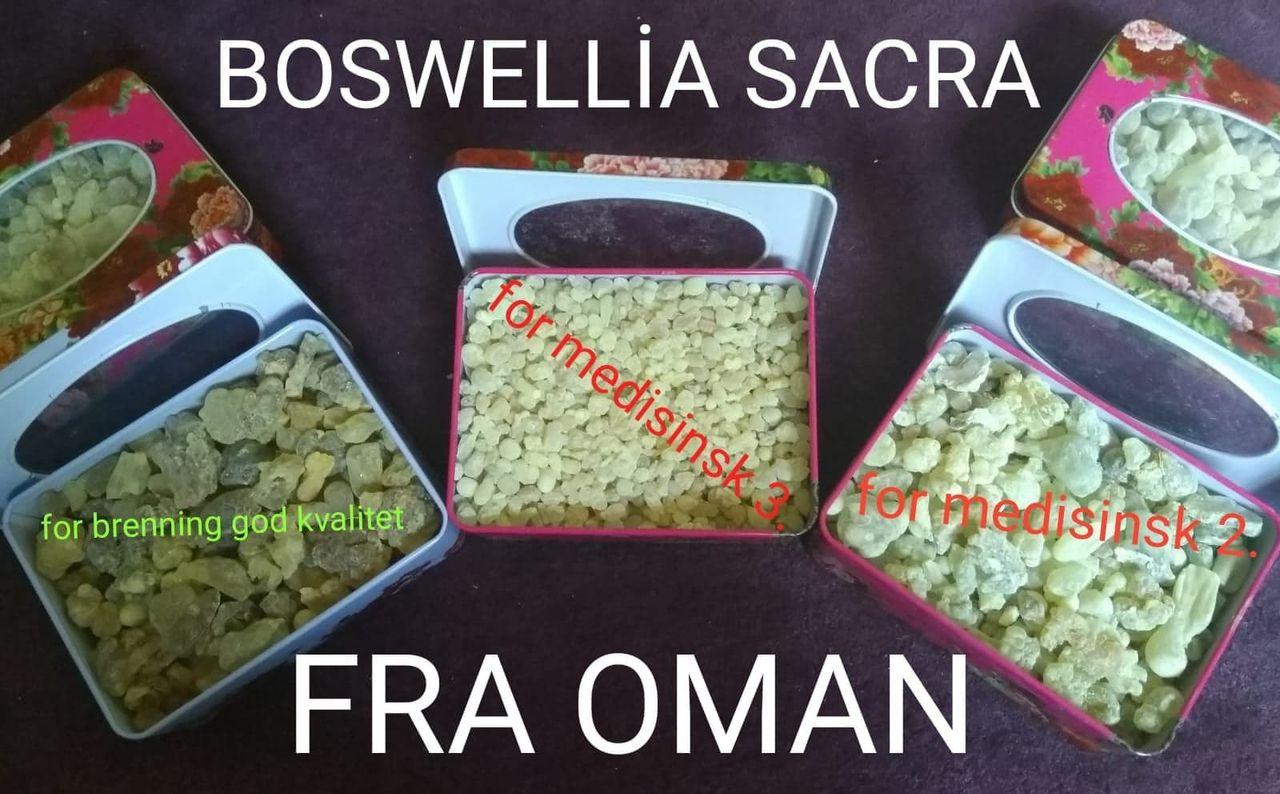 Frankincense Boswellia Sacra Virak Olibanum medisin og