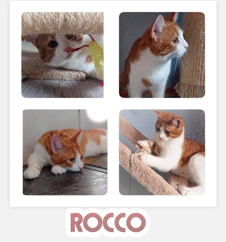 Rocco | FINN.no