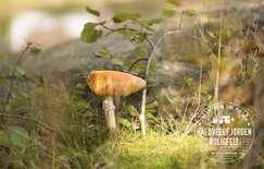 Kaldvellfjorden boligfelt, tomannsboliger, Lillesand | Sørmegleren