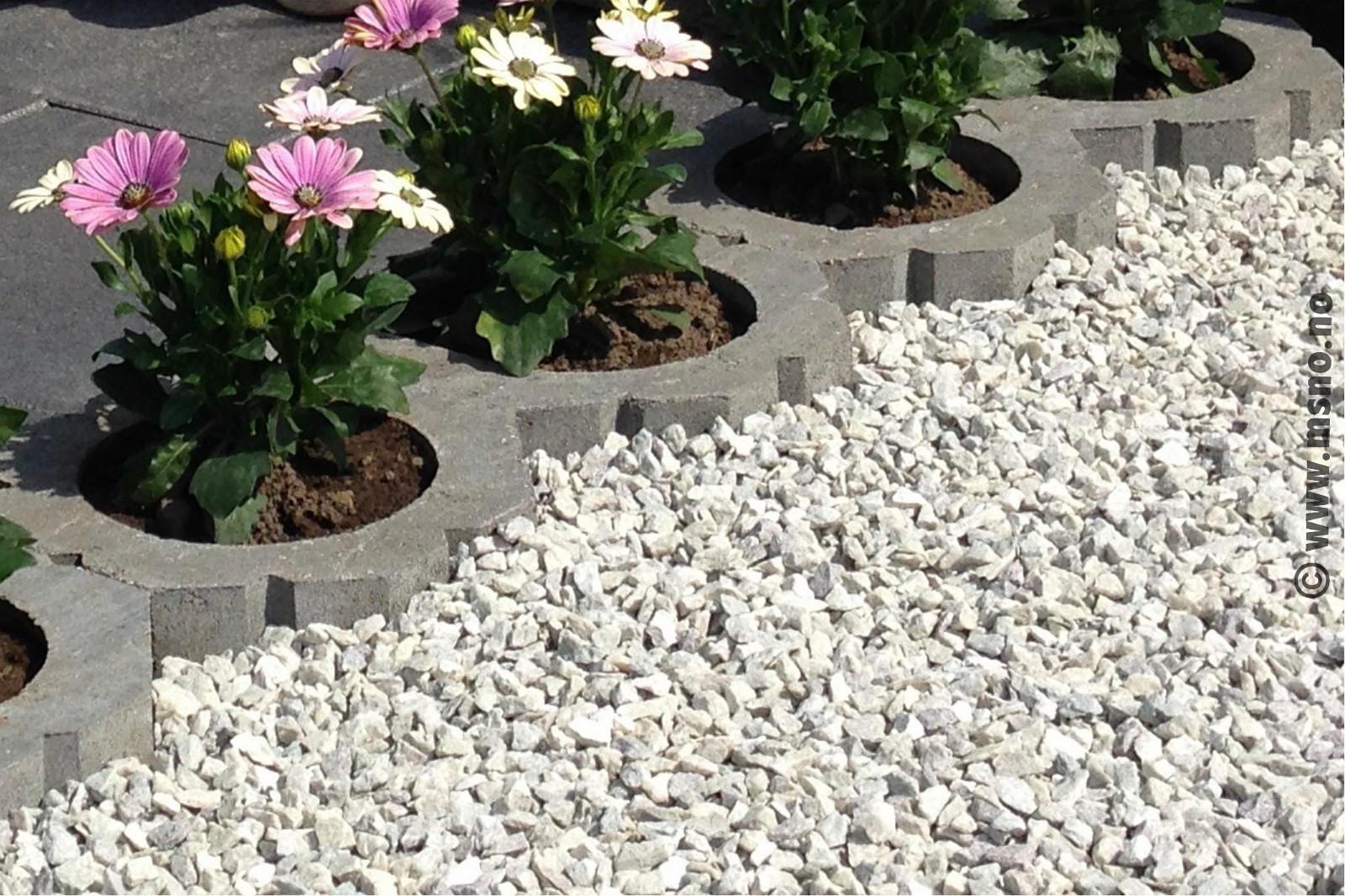 hvit hagesingel akershus