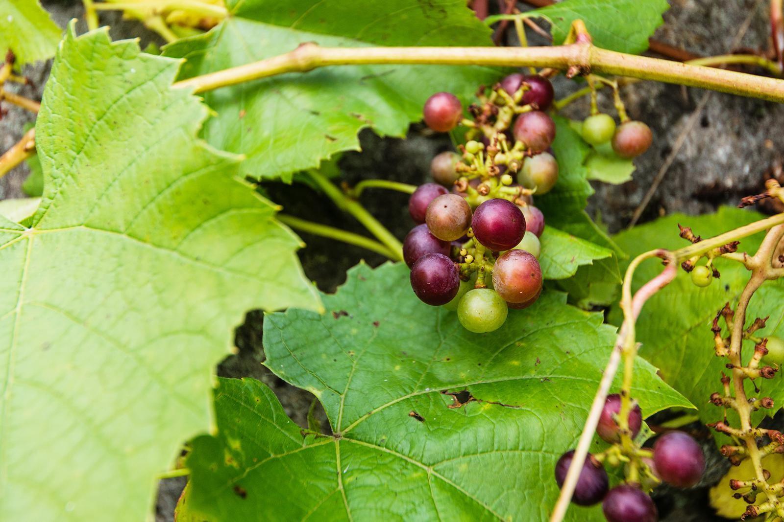druer-pa-tomten