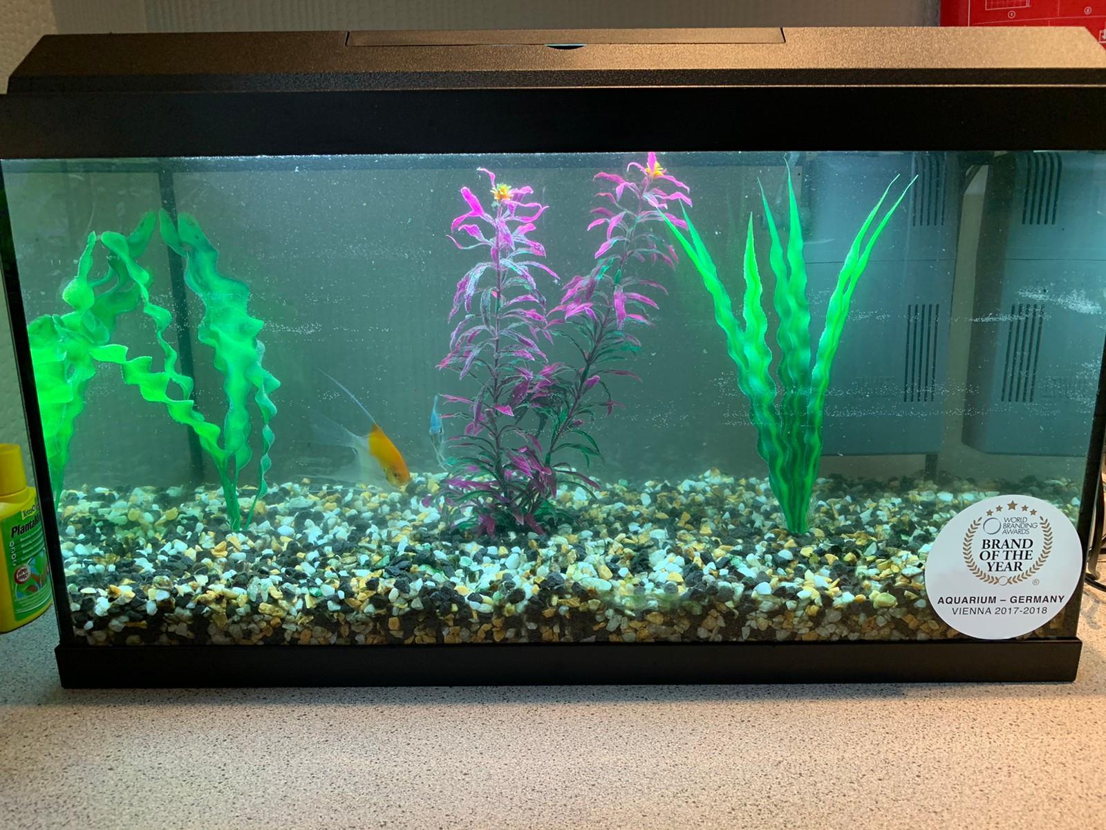Komplett Akvarium med 12 fisker | FINN.no