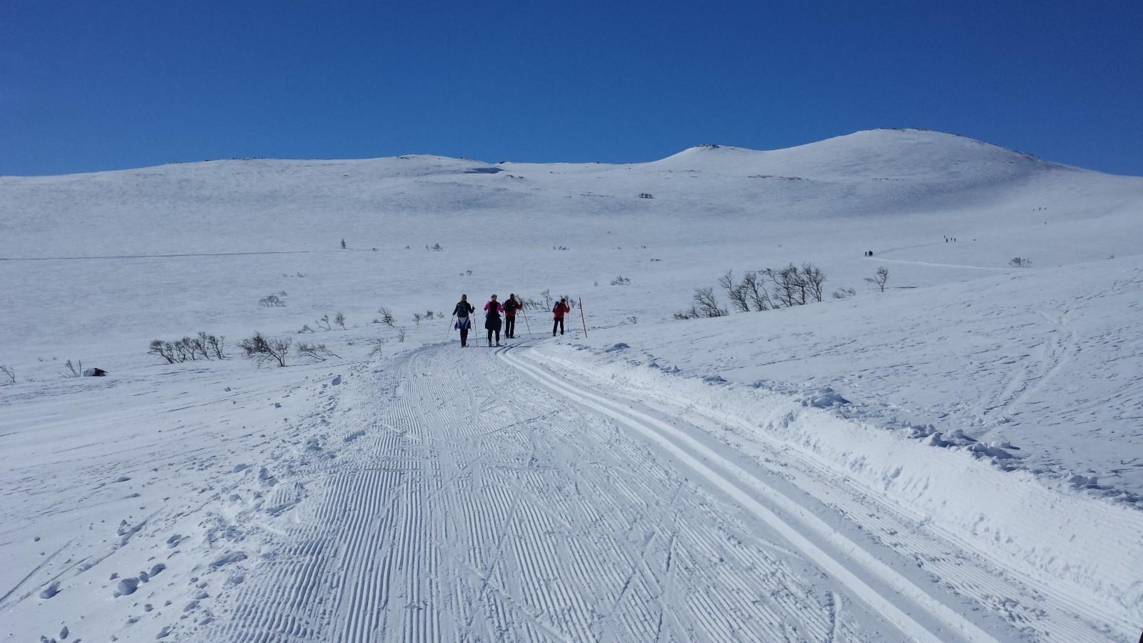 Tomtene har en fantastisk beliggenhet - Kun 150 meter ski kjøring rett ned i det oppkjørte løypenettet rundt Hovden.   - Utsikten er fin, og de oppkjørte skiløypene går rett forbi feltet.