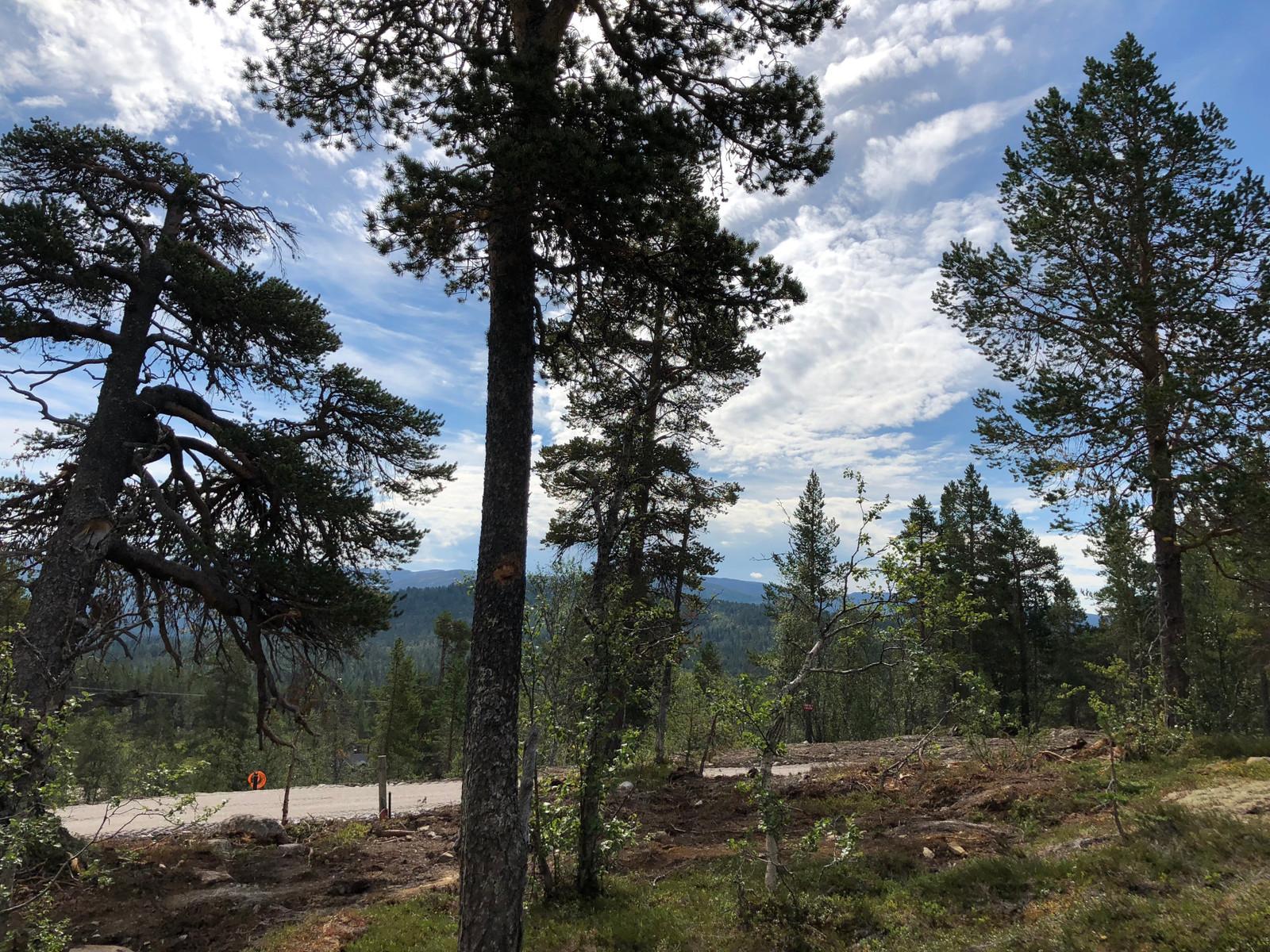 """Området er fantastisk - Gjennom alle de fire årstidene! Utsikten med de lange """"linjene"""" og fjellene i bakgrunnen må bare oppleves!"""