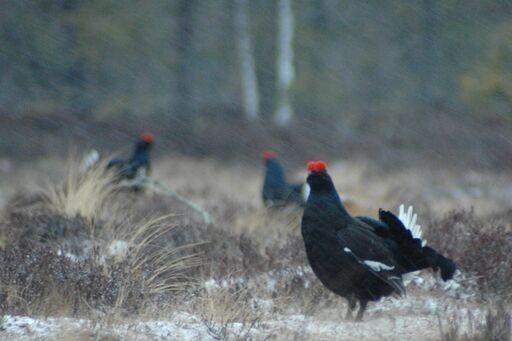 Det er flott natur, samt fugl og dyreliv i området.  Turmulighetene er fantastiske - i alle de fire årstidene.
