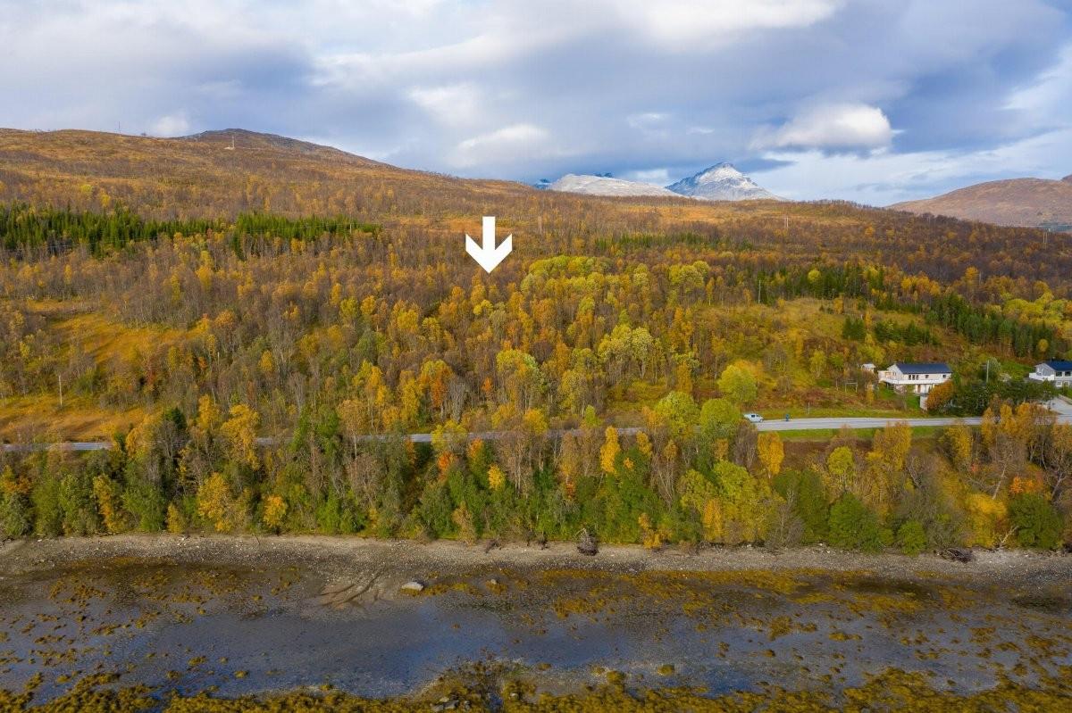Området kan by på en fin natur og og gode lysforhold