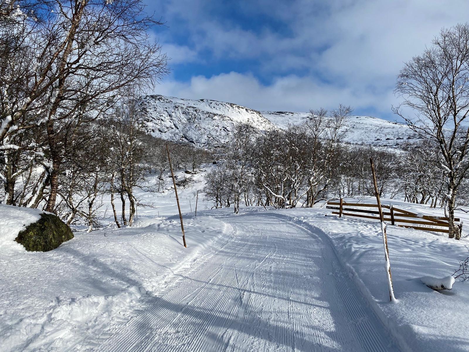 Oppkjørte skiløyper går rett ved hyttene på Hattevarden.  Du kan også renne på ski ned i Alpinanlegget med 3 ned farter.
