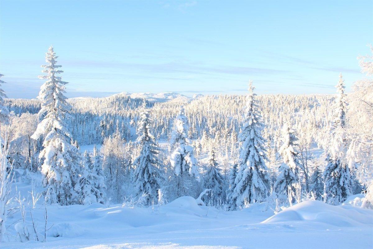 Vinter stemning.
