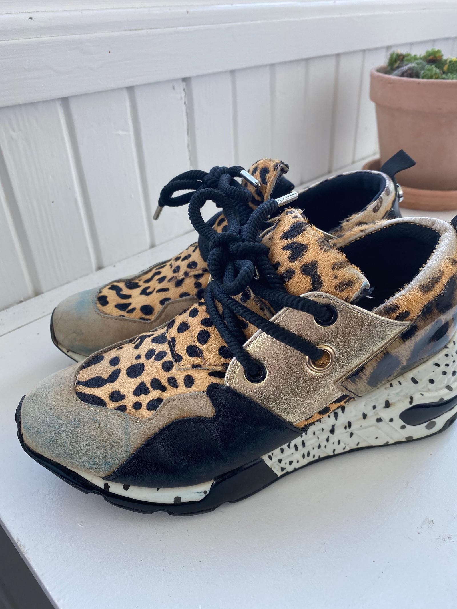 steve madden sko danmark