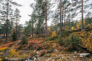 Gautefall / Ubebygd hyttetomt, høyt beliggende, gode solforhold, kort vei til skiløyper og flott turterreng.