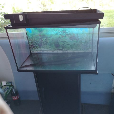 Akvarium 70 L pent brukt med alt utstyr | FINN.no