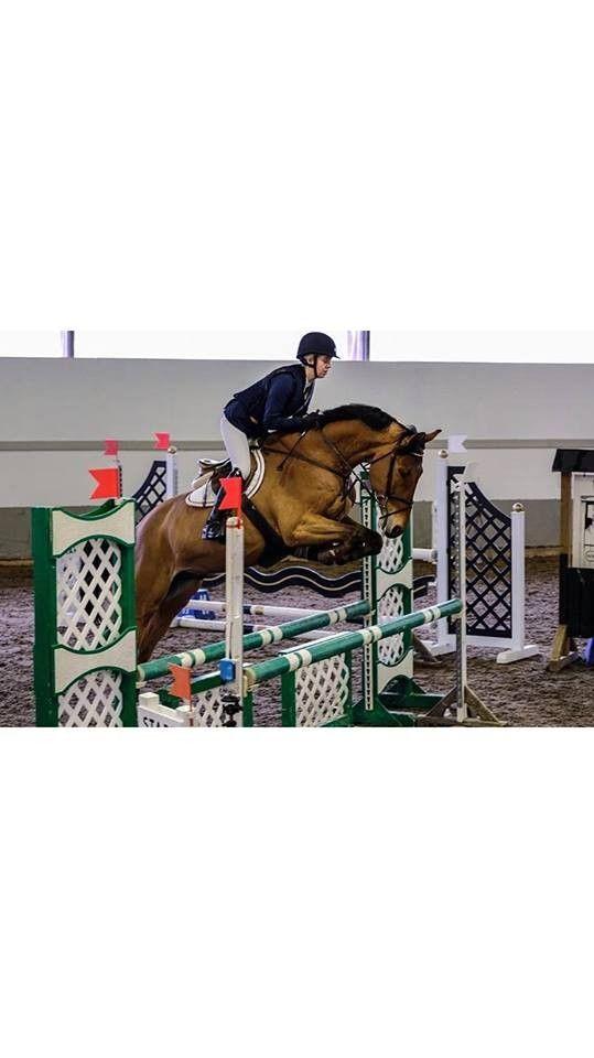 Kjekk spranghest - Nærbø  - Daihatsu T er en hollandsk vallak på 9 år, 1,65 m høy med  Verdi som far. Går 1,30, hopper stor vanngrav og har bl.a startet Oslo Horse Show 2 ganger med gode resultater (se video i annonsen), Bækgaarden og Lanaken i Belgia. En snill hest - Nærbø