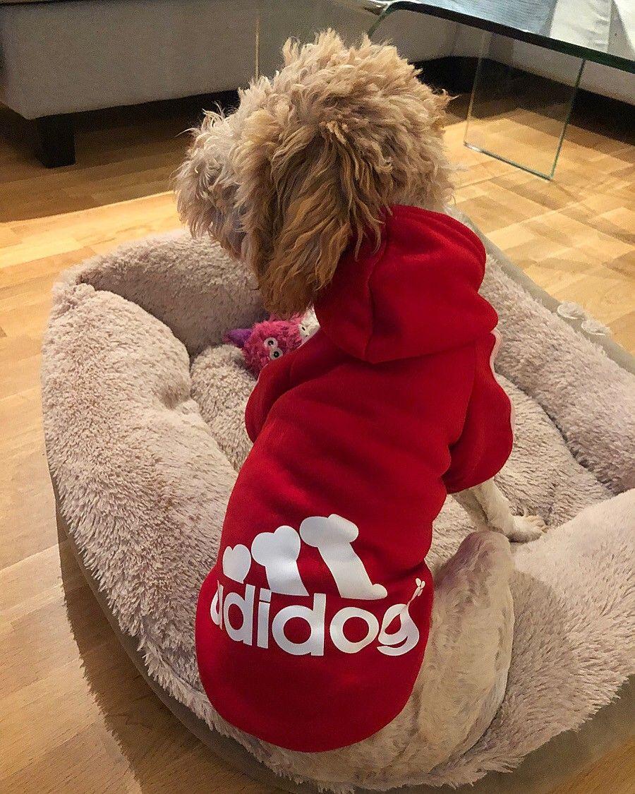 Adidog genser for hund | FINN.no
