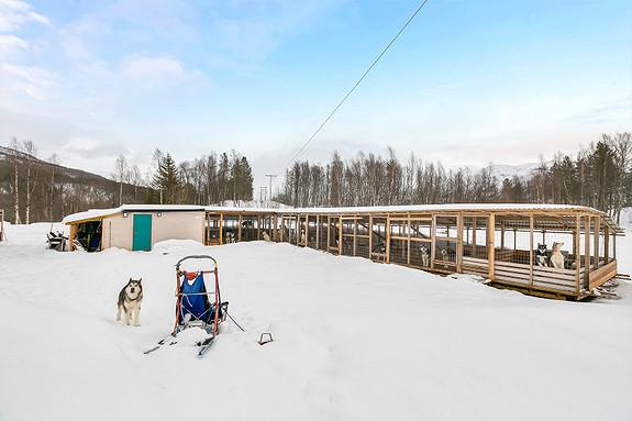 Hundegård på eiendommen - Noe for deg?