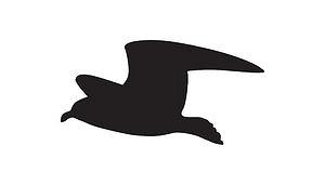 Fuglepigger